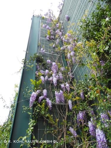 Auf den Lärmschutzwänden aus Mineralwolle fühlen sich Pflanzen wohl.
